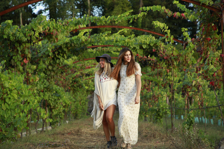 Visitas às vinhas na Região do Vinho Verde de Portugal